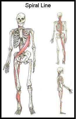Pdf 3rd anatomy trains edition